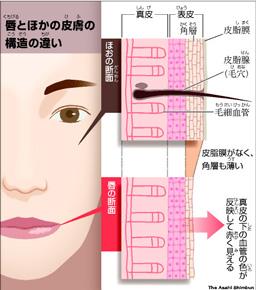 唇断面図朝日新聞